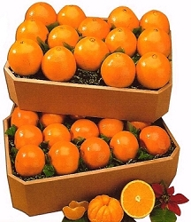 Honey Tangerines & Spring Oranges