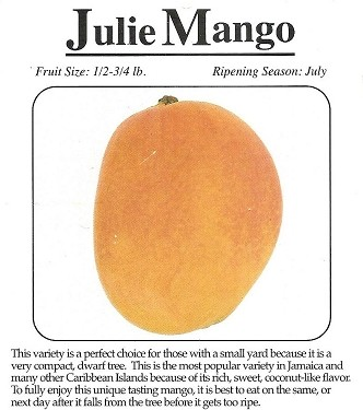 Mango Tree - Julie