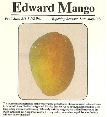 Mango Tree - Edward